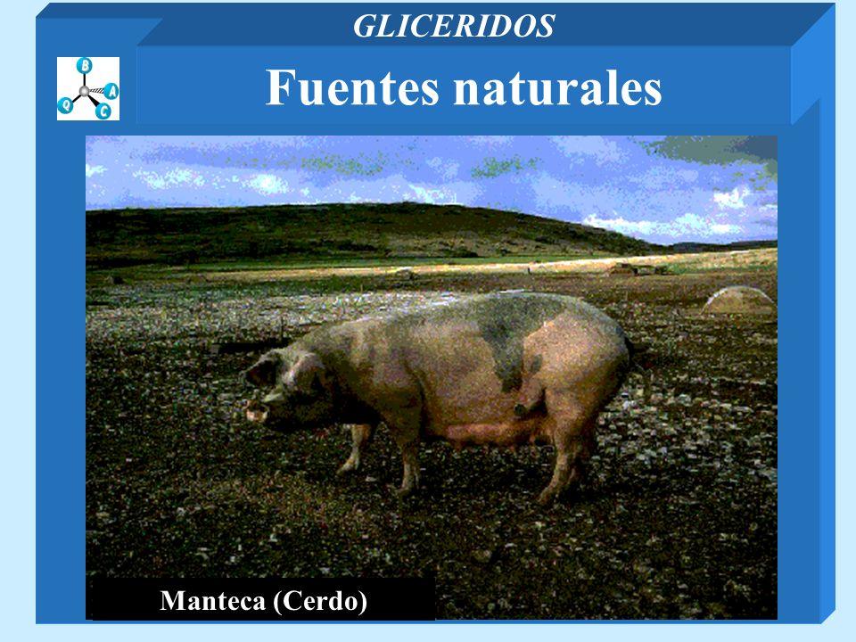 Manteca (Cerdo) Fuentes naturales GLICERIDOS