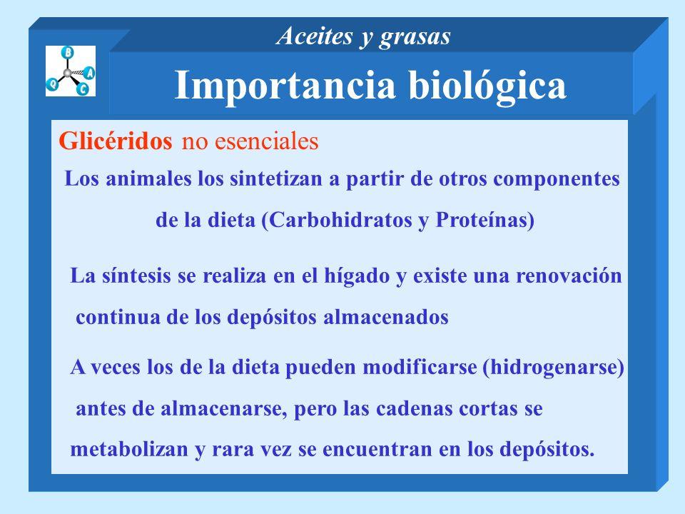 Importancia biológica Aceites y grasas Glicéridos no esenciales Los animales los sintetizan a partir de otros componentes de la dieta (Carbohidratos y