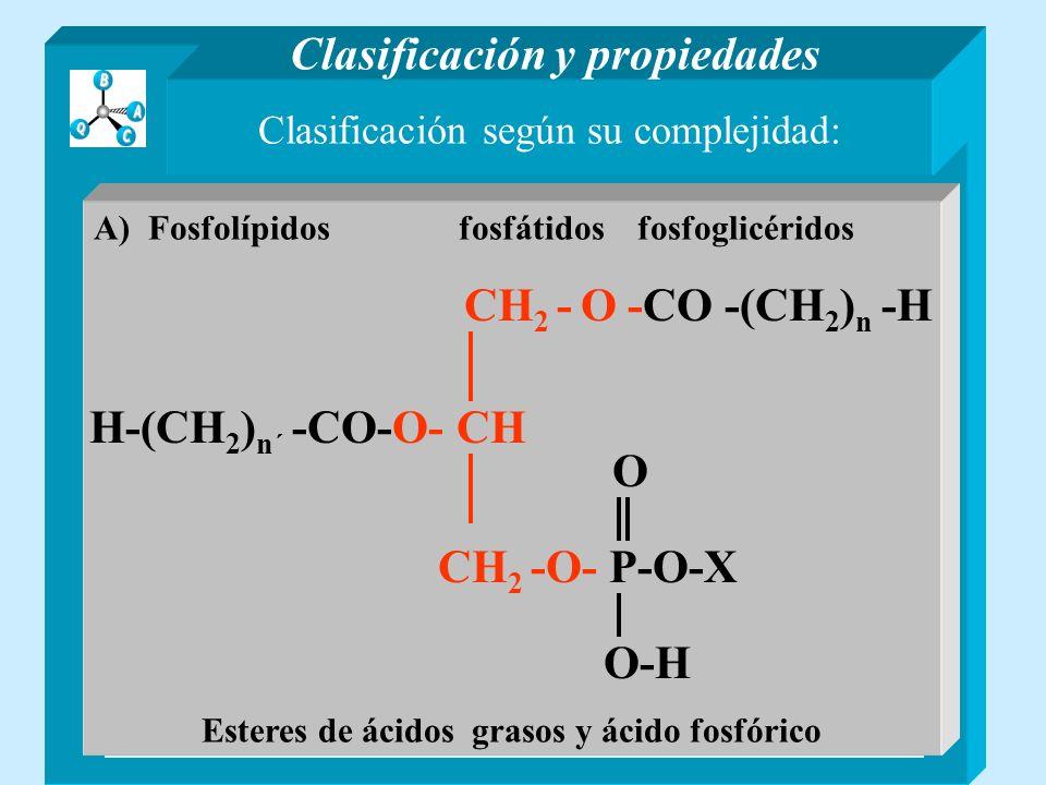 Clasificación según su complejidad: Lípidos sencillos Son ésteres de ácidos grasos y alcoholes Lípidos compuestos Contienen otros compuestos distintos de ácidos grasos y alcoholes Clasificación y propiedades A) GlicéridosB) Ceras A) FosfolípidosB) Glicolípidos C) Esfingolípidos y otros lípidos B) Glicolípidos B) Glicolípidos Glicosilglicéridos Esteres de ácidos grasos y glicósidos de la glicerina CH 2 - O -CO -(CH 2 ) n -H H-(CH 2 ) n´ -CO-O- CH 2 CH CHOH CH -O- CH 2 CHOH CHOH-CHOH O