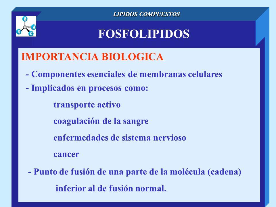 FOSFOLIPIDOS LIPIDOS COMPUESTOS IMPORTANCIA BIOLOGICA - Componentes esenciales de membranas celulares - Implicados en procesos como: transporte activo