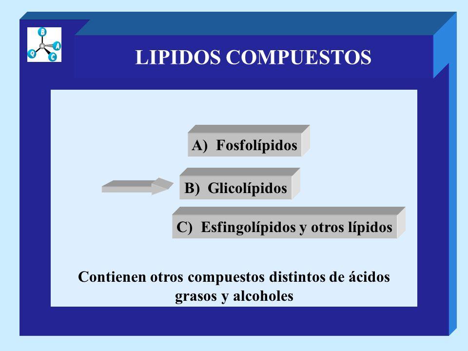 LIPIDOS COMPUESTOS Contienen otros compuestos distintos de ácidos grasos y alcoholes A) Fosfolípidos B) Glicolípidos C) Esfingolípidos y otros lípidos