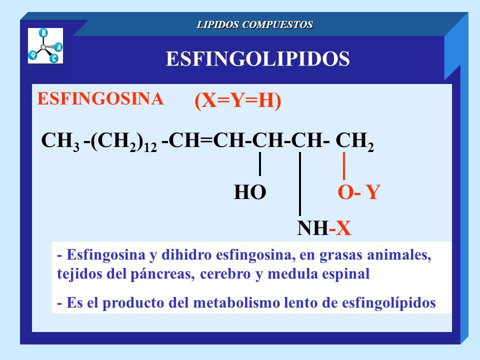 ESFINGOLIPIDOS LIPIDOS COMPUESTOS ESFINGOSINA CH 3 -(CH 2 ) 12 -CH=CH-CH-CH- CH 2 NH-X O- YHO (X=Y=H) - Esfingosina y dihidro esfingosina, en grasas a