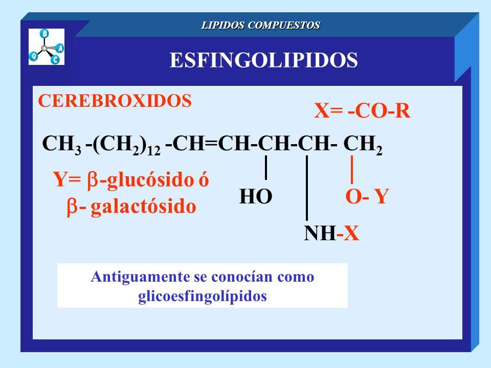 ESFINGOLIPIDOS LIPIDOS COMPUESTOS CEREBROXIDOS CH 3 -(CH 2 ) 12 -CH=CH-CH-CH- CH 2 NH-X O- YHO X= -CO-R Antiguamente se conocían como glicoesfingolípi