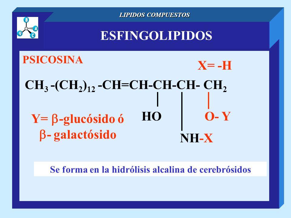 ESFINGOLIPIDOS LIPIDOS COMPUESTOS PSICOSINA CH 3 -(CH 2 ) 12 -CH=CH-CH-CH- CH 2 NH-X O- YHO X= -H Se forma en la hidrólisis alcalina de cerebrósidos Y