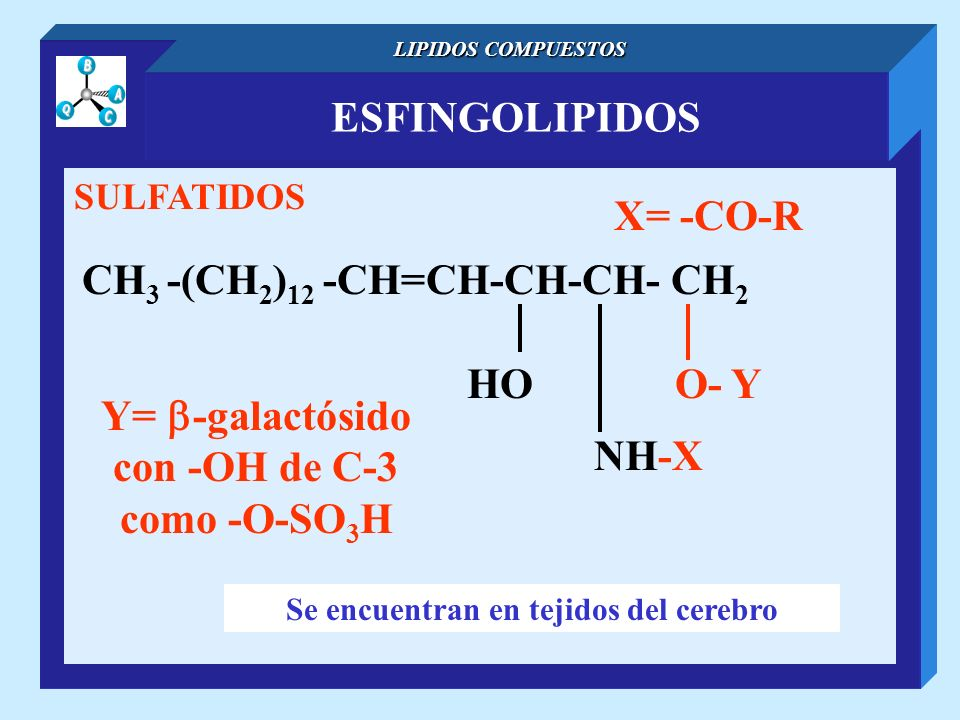 ESFINGOLIPIDOS LIPIDOS COMPUESTOS SULFATIDOS CH 3 -(CH 2 ) 12 -CH=CH-CH-CH- CH 2 NH-X O- YHO X= -CO-R Se encuentran en tejidos del cerebro Y= -galactó