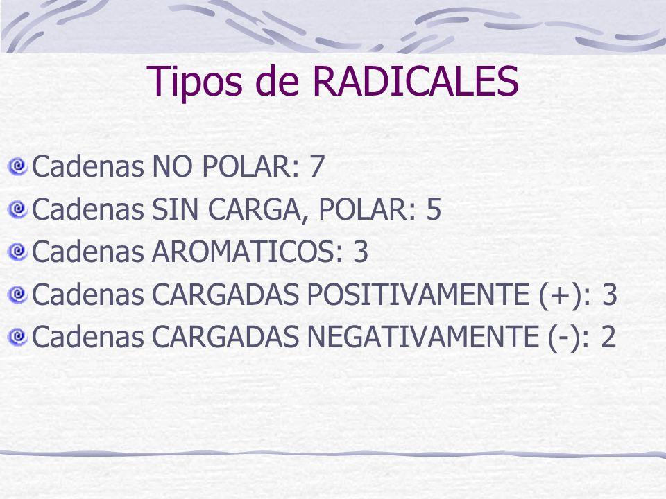 Tipos de RADICALES Cadenas NO POLAR: 7 Cadenas SIN CARGA, POLAR: 5 Cadenas AROMATICOS: 3 Cadenas CARGADAS POSITIVAMENTE (+): 3 Cadenas CARGADAS NEGATI