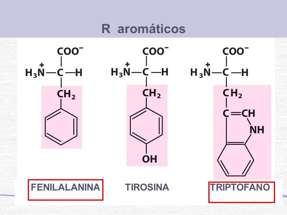 R aromáticos FENILALANINA TIROSINA TRIPTOFANO