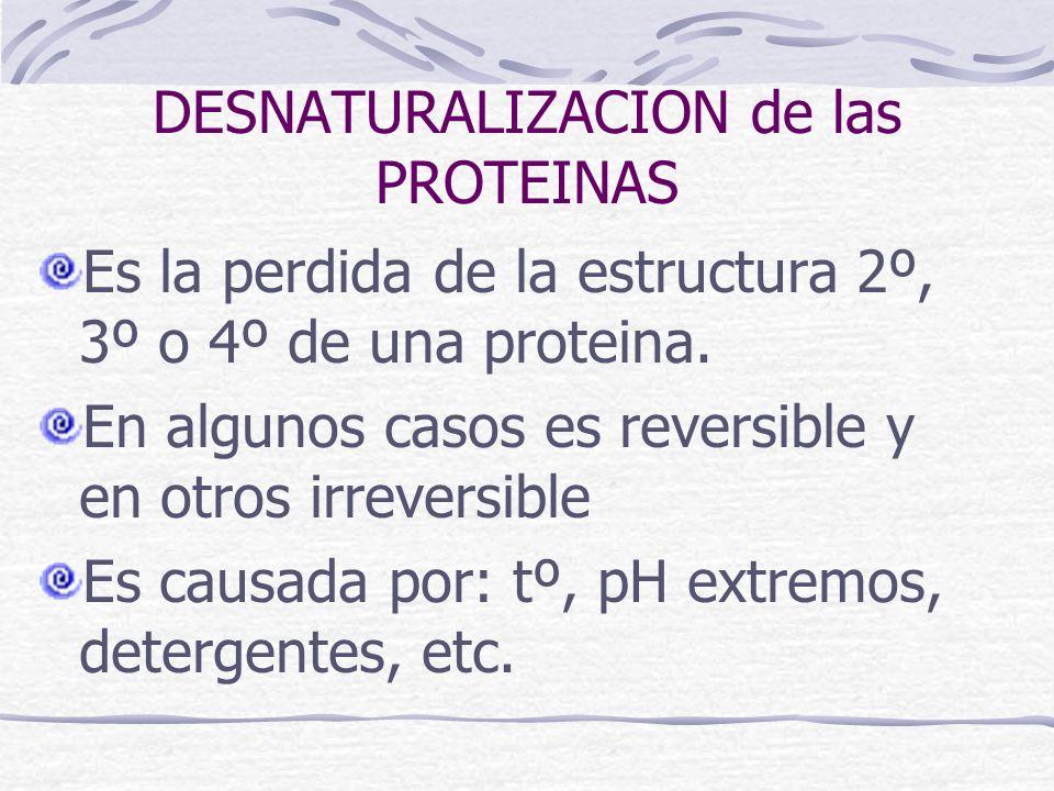 DESNATURALIZACION de las PROTEINAS Es la perdida de la estructura 2º, 3º o 4º de una proteina. En algunos casos es reversible y en otros irreversible