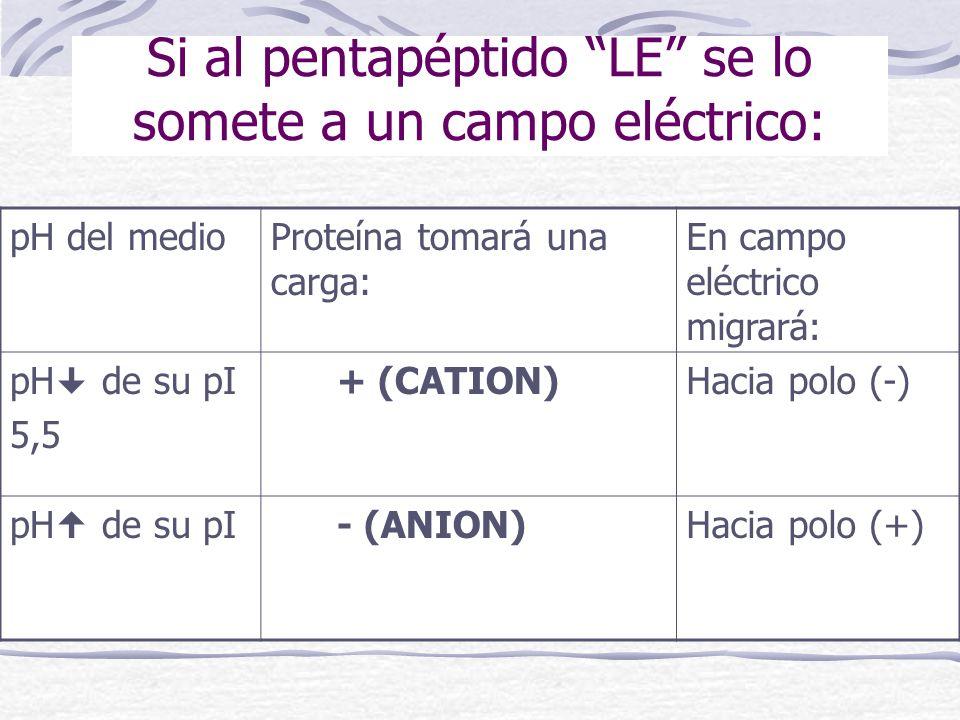 Si al pentapéptido LE se lo somete a un campo eléctrico: pH del medioProteína tomará una carga: En campo eléctrico migrará: pH de su pI 5,5 + (CATION)