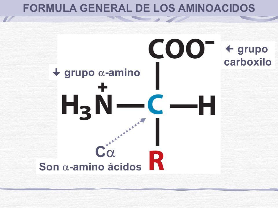 FORMULA GENERAL DE LOS AMINOACIDOS C grupo -amino grupo carboxilo Son -amino ácidos