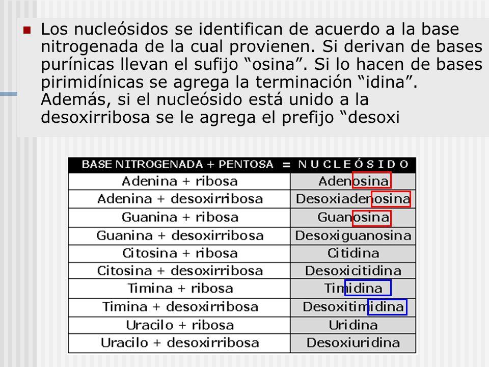 Los nucleósidos se identifican de acuerdo a la base nitrogenada de la cual provienen. Si derivan de bases purínicas llevan el sufijo osina. Si lo hace