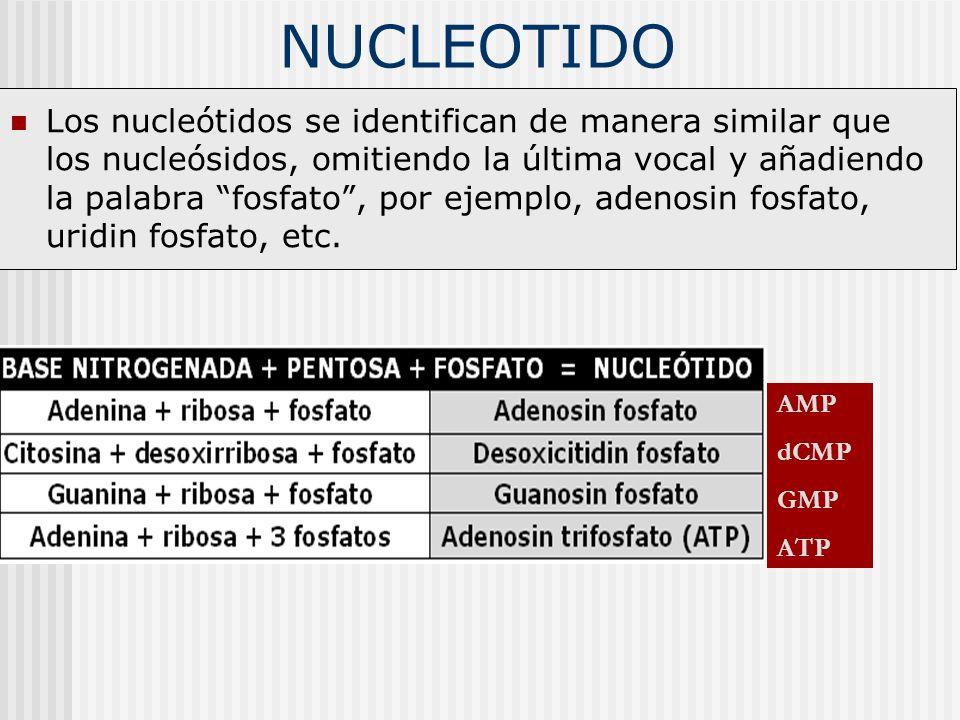 NUCLEOTIDO Los nucleótidos se identifican de manera similar que los nucleósidos, omitiendo la última vocal y añadiendo la palabra fosfato, por ejemplo
