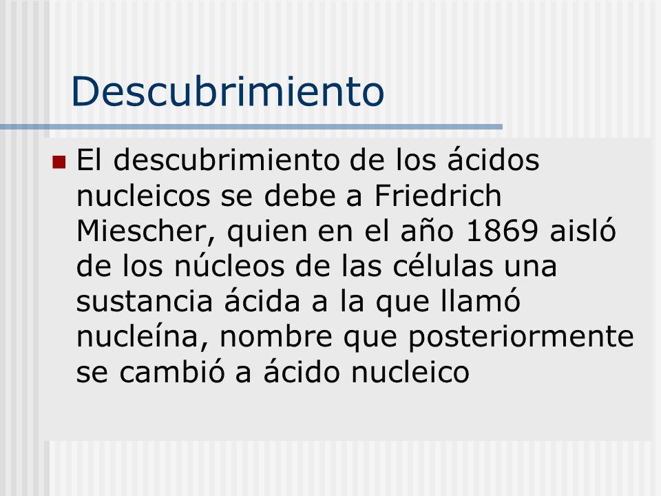 Descubrimiento El descubrimiento de los ácidos nucleicos se debe a Friedrich Miescher, quien en el año 1869 aisló de los núcleos de las células una su