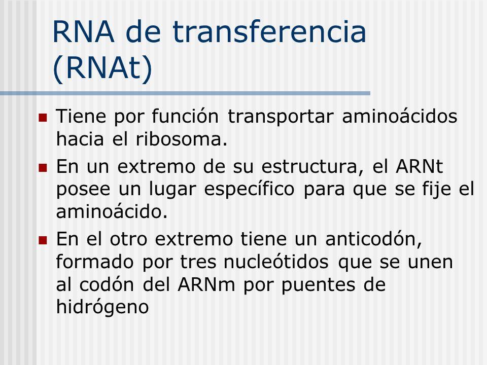 RNA de transferencia (RNAt) Tiene por función transportar aminoácidos hacia el ribosoma. En un extremo de su estructura, el ARNt posee un lugar especí