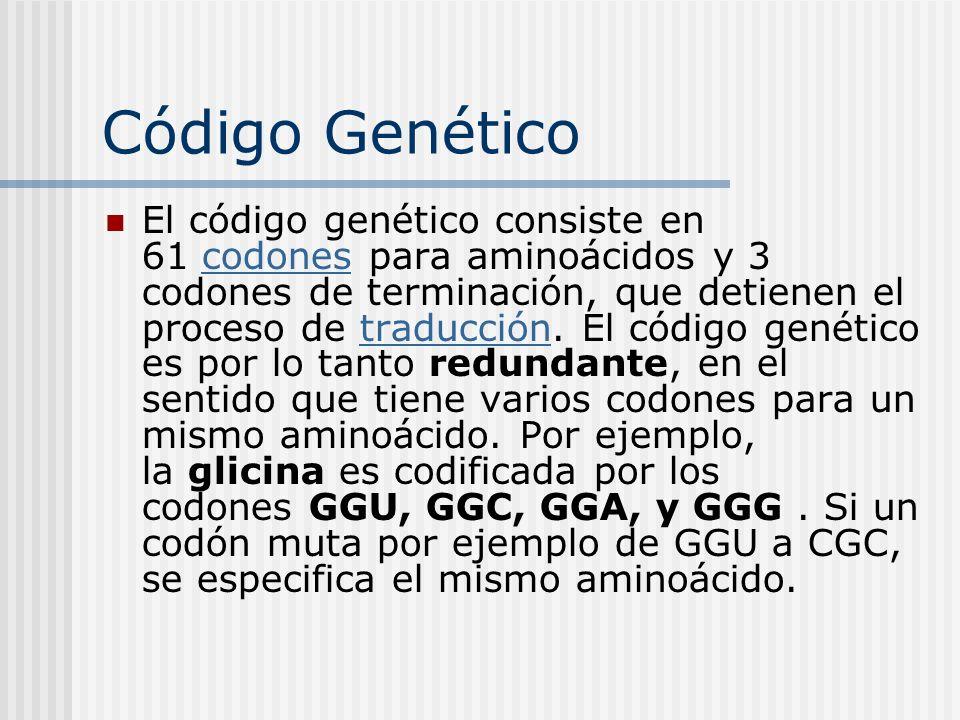 Código Genético El código genético consiste en 61 codones para aminoácidos y 3 codones de terminación, que detienen el proceso de traducción. El códig