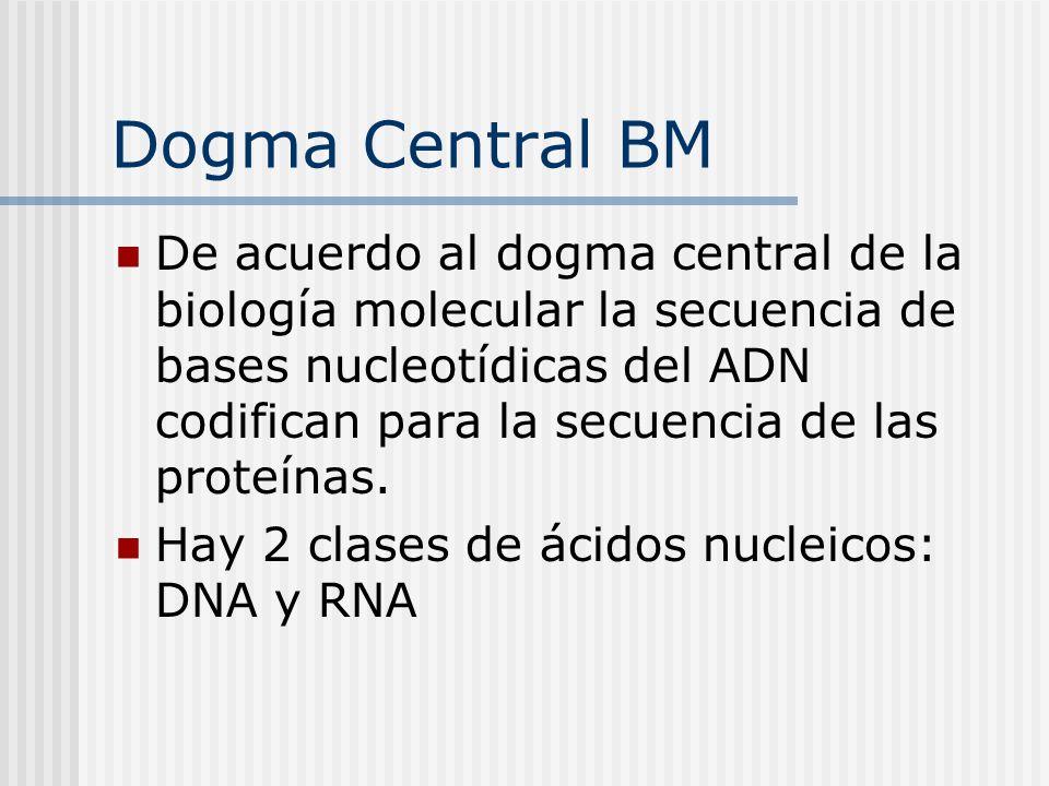 Dogma Central BM De acuerdo al dogma central de la biología molecular la secuencia de bases nucleotídicas del ADN codifican para la secuencia de las p