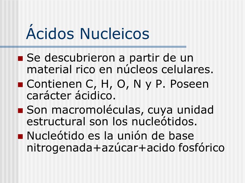 Ácidos Nucleicos Se descubrieron a partir de un material rico en núcleos celulares. Contienen C, H, O, N y P. Poseen carácter ácidico. Son macromolécu