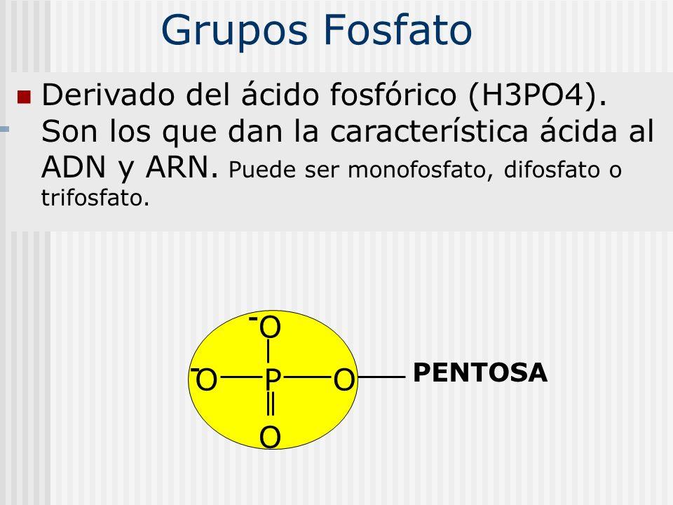 Grupos Fosfato Derivado del ácido fosfórico (H3PO4). Son los que dan la característica ácida al ADN y ARN. Puede ser monofosfato, difosfato o trifosfa