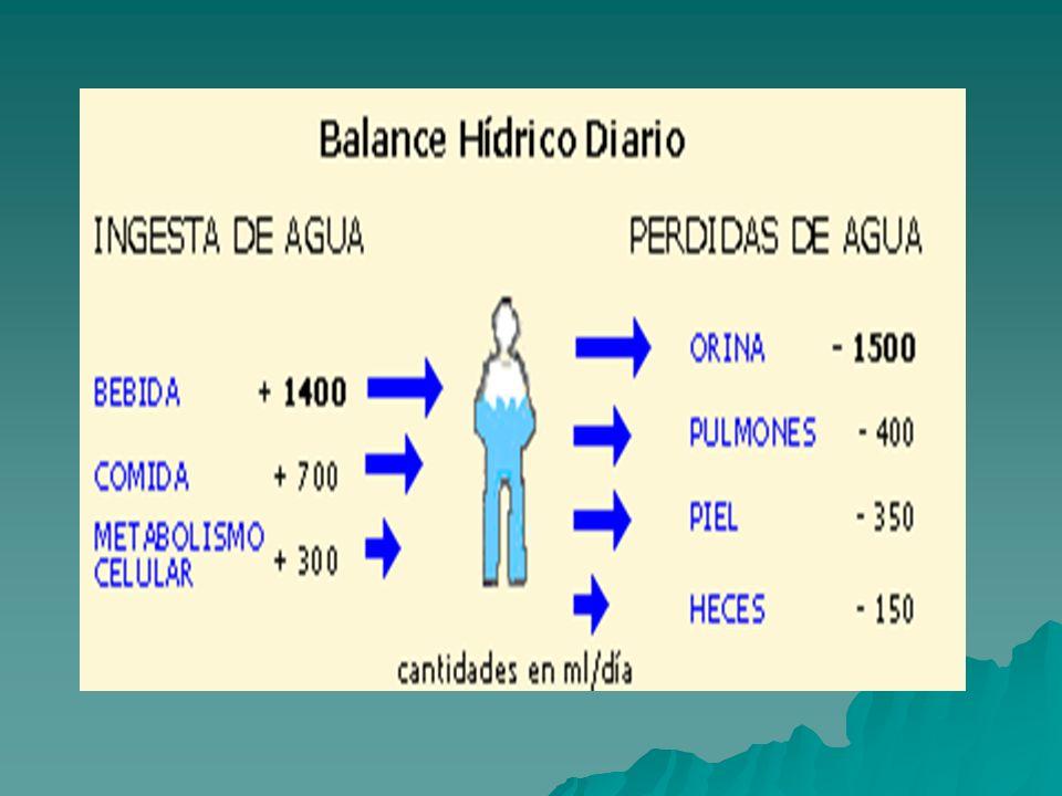 Funciones de agua en el organismo La importancia del agua en el organismo es debida a la diversidad de funciones que cumple, ya que no es un compuesto inerte, sino que interviene en numerosos procesos fisiológicos.