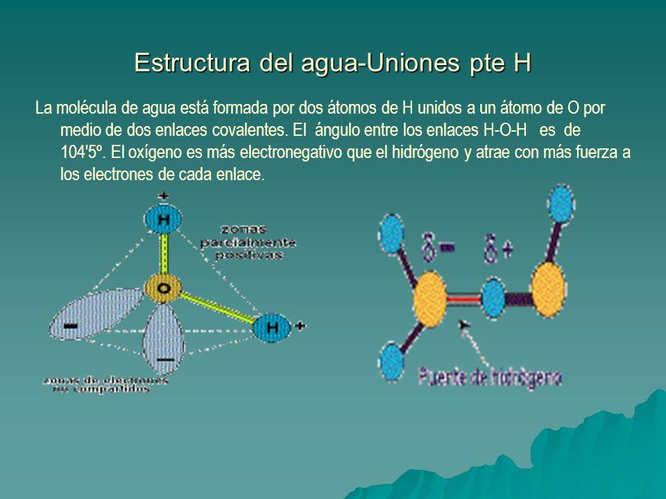 Estructura del agua-Uniones pte H La molécula de agua está formada por dos átomos de H unidos a un átomo de O por medio de dos enlaces covalentes. El