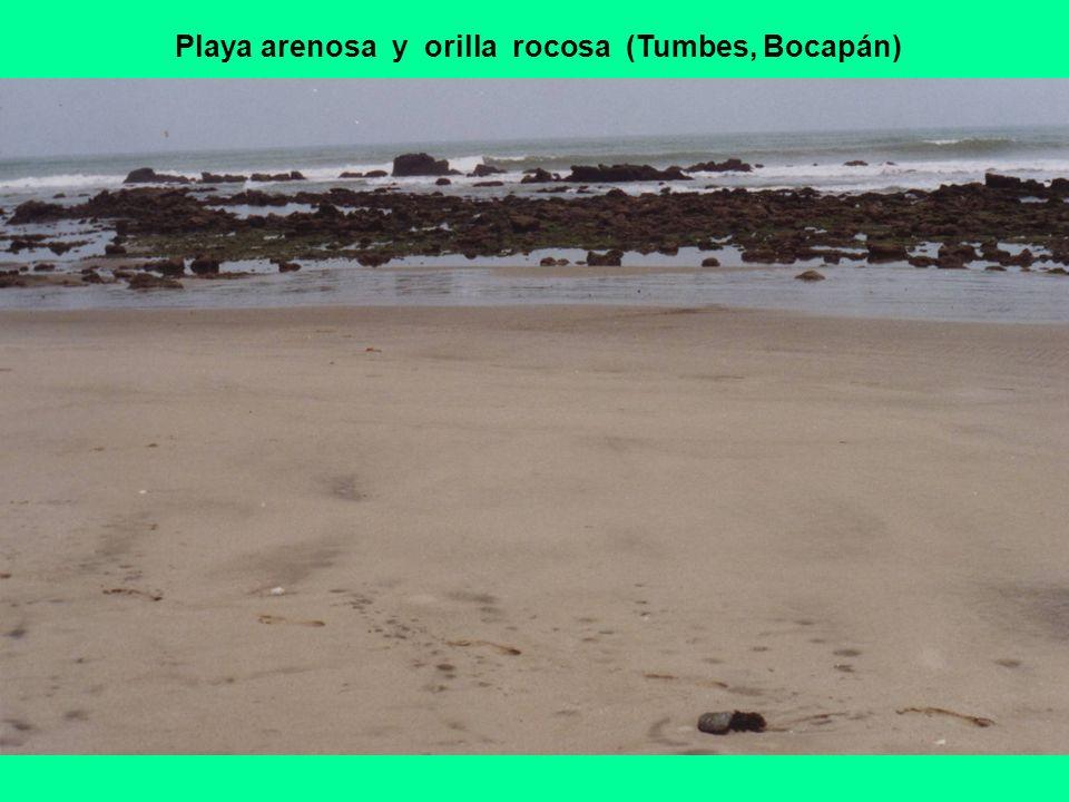 Playa arenosa y orilla rocosa (Tumbes, Bocapán)
