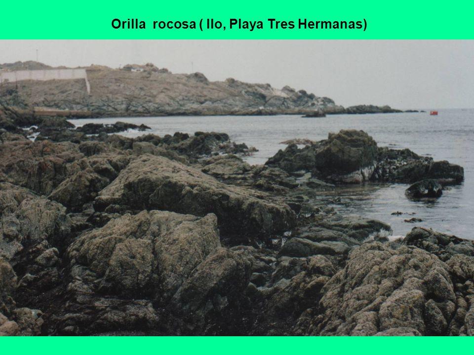Orilla rocosa ( Ilo, Playa Tres Hermanas)