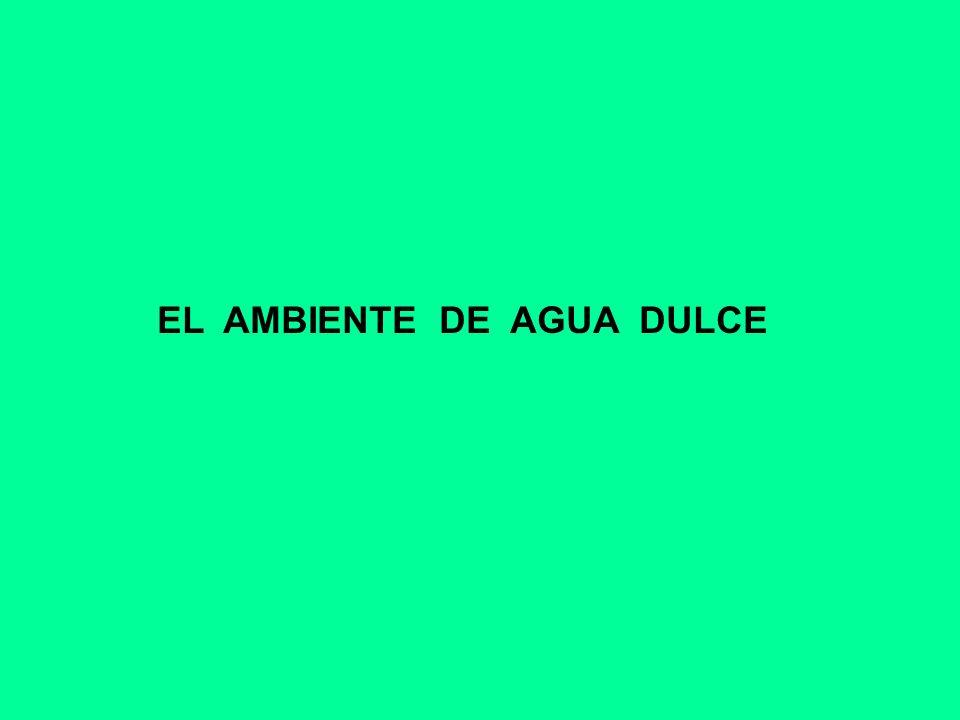 EL AMBIENTE DE AGUA DULCE