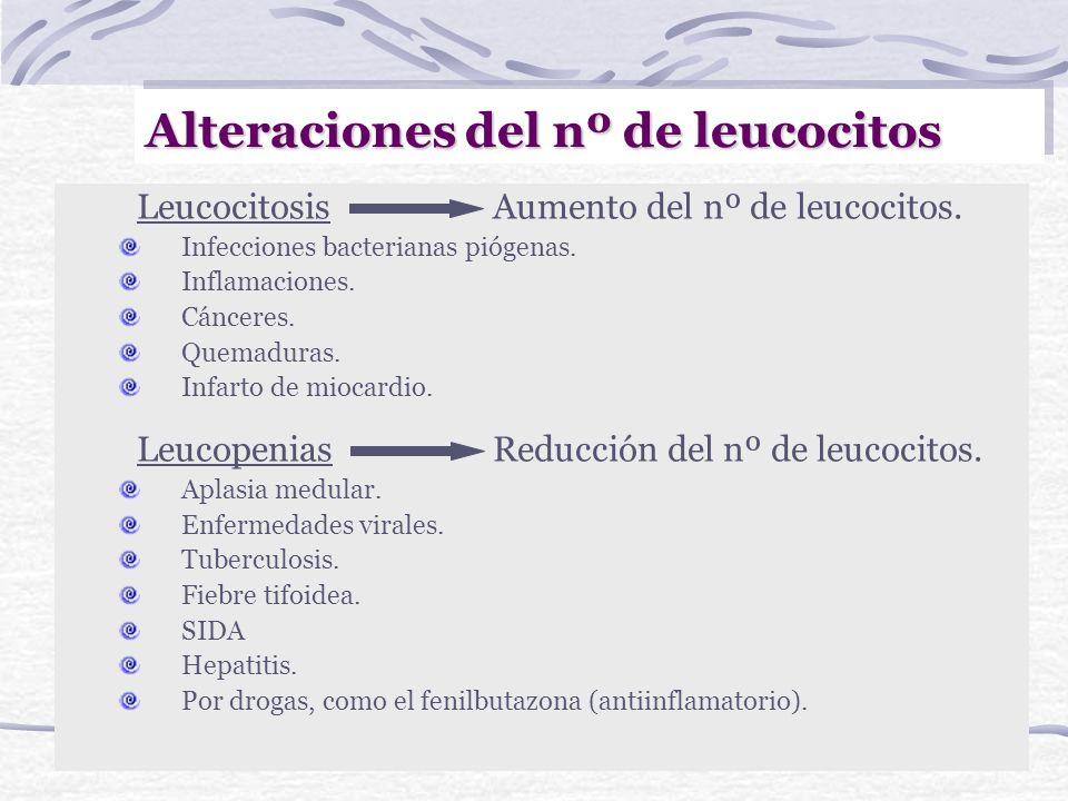 Fórmula Leucocitaria Normal (%) Eosinófilos1-3 Basófilos0-1 Neutrófilos60-70 Linfocitos20-45 Monocitos3-7 Número de leucocitos 5.000-10.000 /mm 3