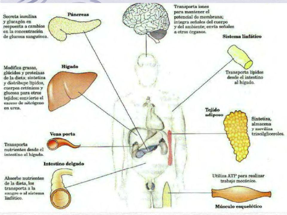 Sangre Normal y tipos de PMN (Basófilo)