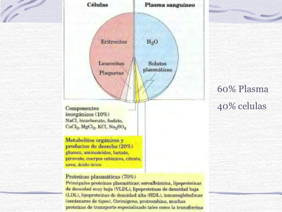 60% Plasma 40% celulas