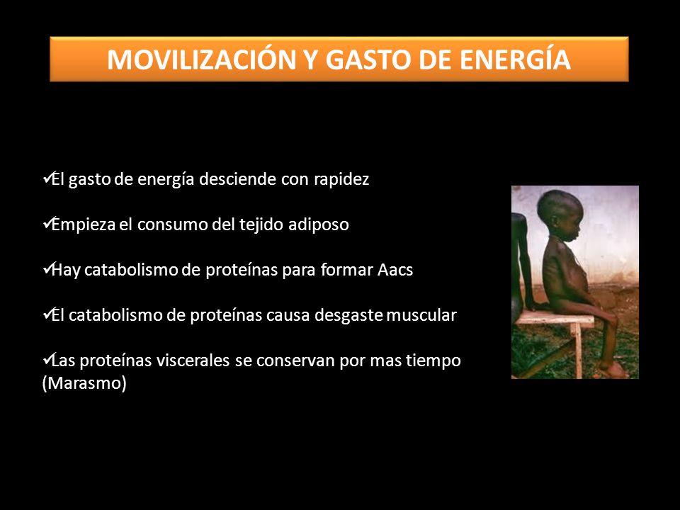 El gasto de energía desciende con rapidez Empieza el consumo del tejido adiposo Hay catabolismo de proteínas para formar Aacs El catabolismo de proteínas causa desgaste muscular Las proteínas viscerales se conservan por mas tiempo (Marasmo) MOVILIZACIÓN Y GASTO DE ENERGÍA