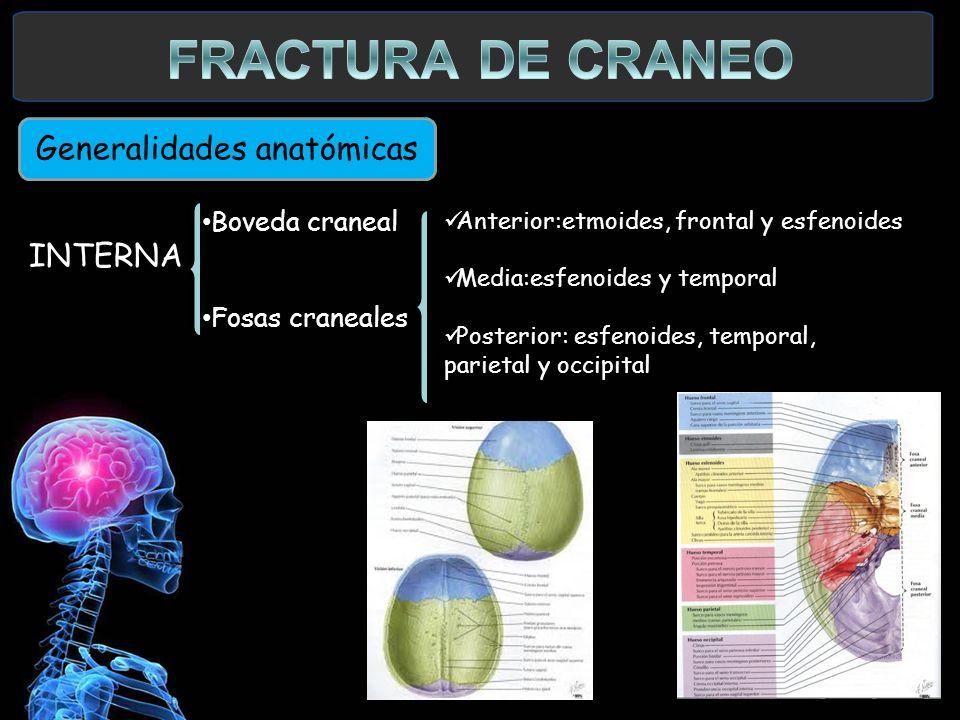 INTERNA Generalidades anatómicas INTERNA Boveda craneal Fosas craneales Anterior:etmoides, frontal y esfenoides Media:esfenoides y temporal Posterior: