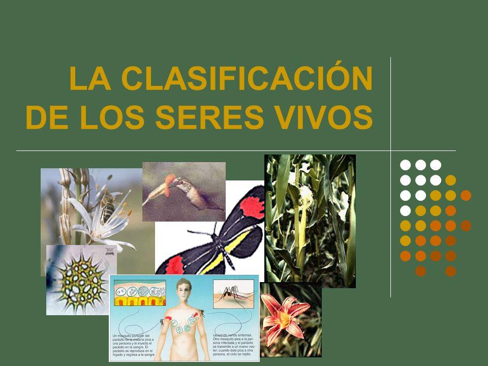 LA HISTORIA DE LA CLASIFICACIÓN ¿Por qué se necesita un sistema de clasificación.
