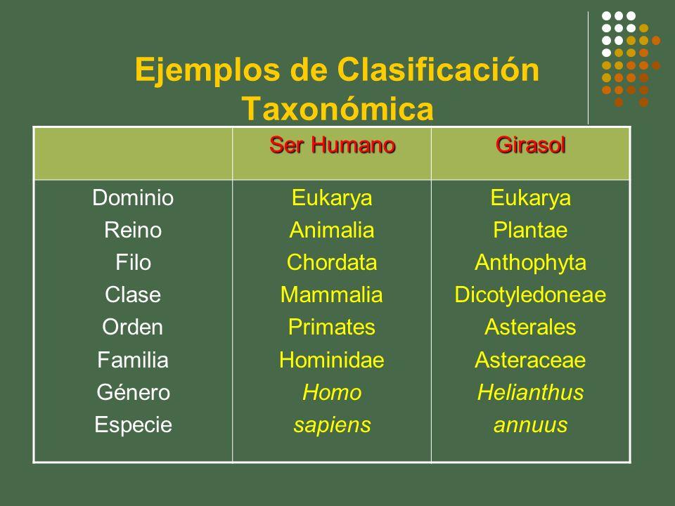 Ejemplos de Clasificación Taxonómica Ser Humano Girasol Dominio Reino Filo Clase Orden Familia Género Especie Eukarya Animalia Chordata Mammalia Prima