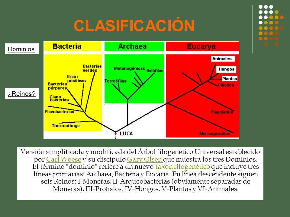 CLASIFICACIÓN Versión simplificada y modificada del Árbol filogenético Universal establecido por Carl Woese y su discípulo Gary Olsen que muestra los