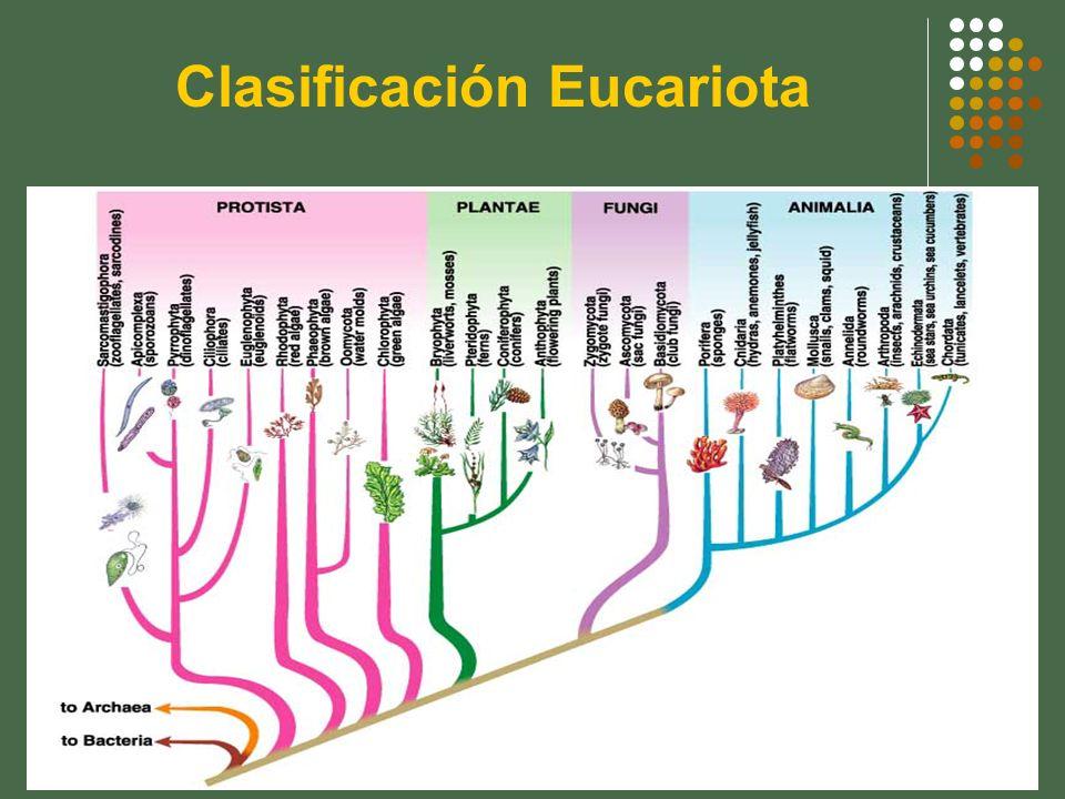 Clasificación Eucariota