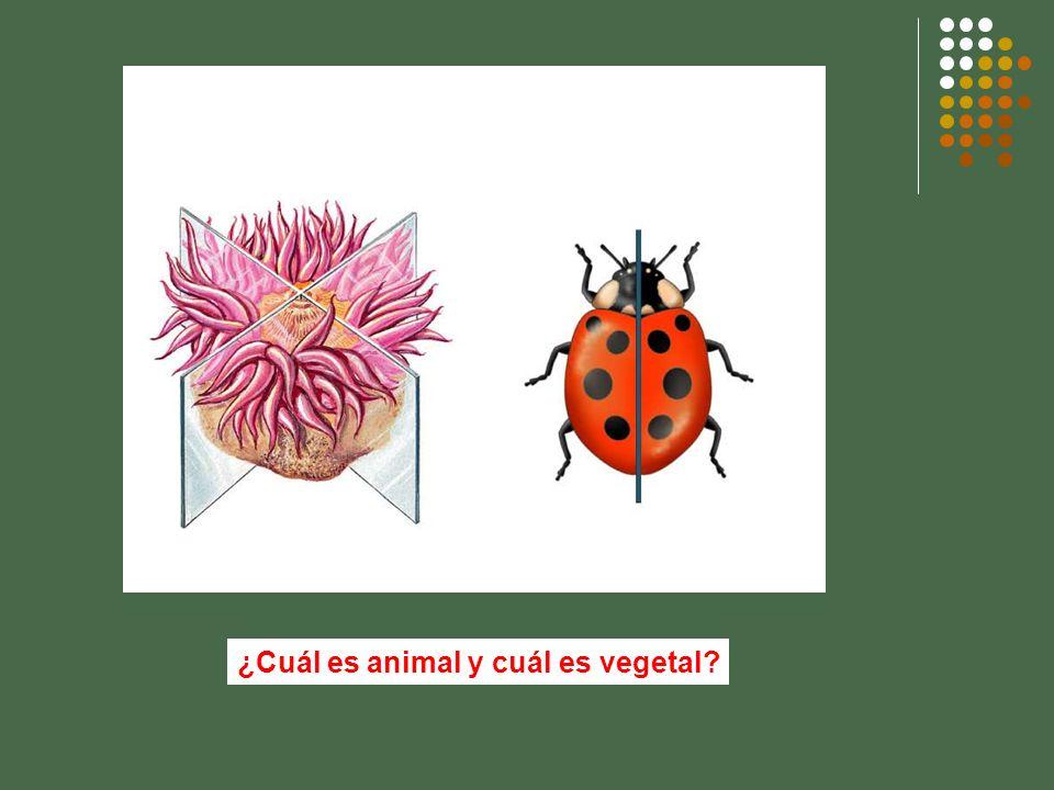 ¿Cuál es animal y cuál es vegetal?