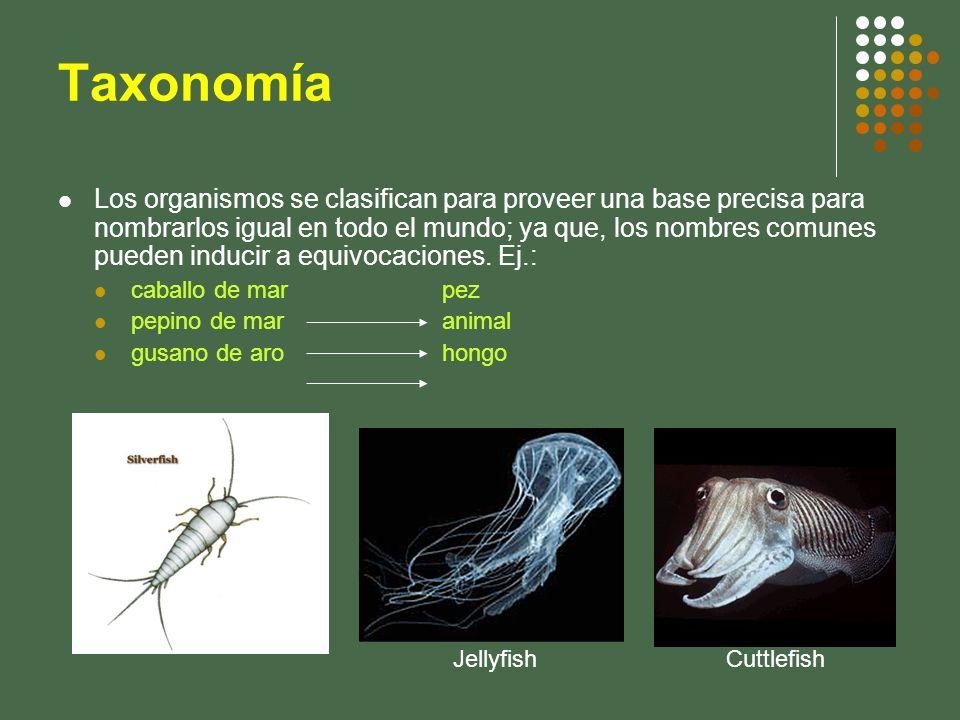 Taxonomía Los organismos se clasifican para proveer una base precisa para nombrarlos igual en todo el mundo; ya que, los nombres comunes pueden induci