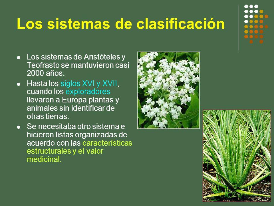 Los sistemas de clasificación Los sistemas de Aristóteles y Teofrasto se mantuvieron casi 2000 años. Hasta los siglos XVI y XVII, cuando los explorado