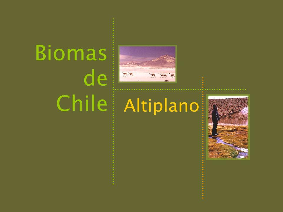 UBICACIÓN GEOGRÁFICA (Latitud):18°- 27° S ALTITUD: 3700-4000 msnm CLIMA:seco y frío PRECIPITACIONESmenos de 100 mm, en verano TEMPERATURAS Media anual1° C Promedio temp.
