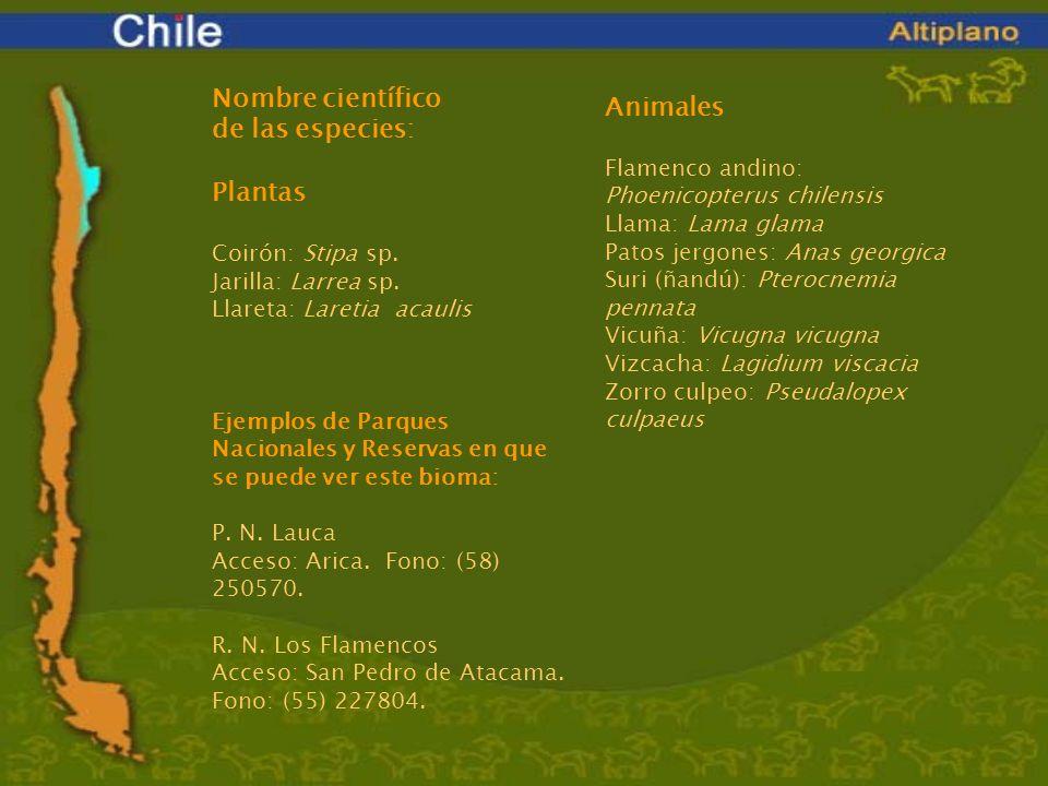 Nombre científico de las especies: Plantas Coirón: Stipa sp. Jarilla: Larrea sp. Llareta: Laretia acaulis Animales Flamenco andino: Phoenicopterus chi