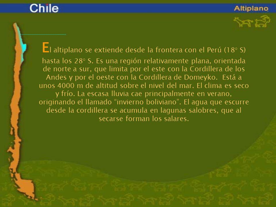 E l altiplano se extiende desde la frontera con el Perú (18° S) hasta los 28° S. Es una región relativamente plana, orientada de norte a sur, que limi