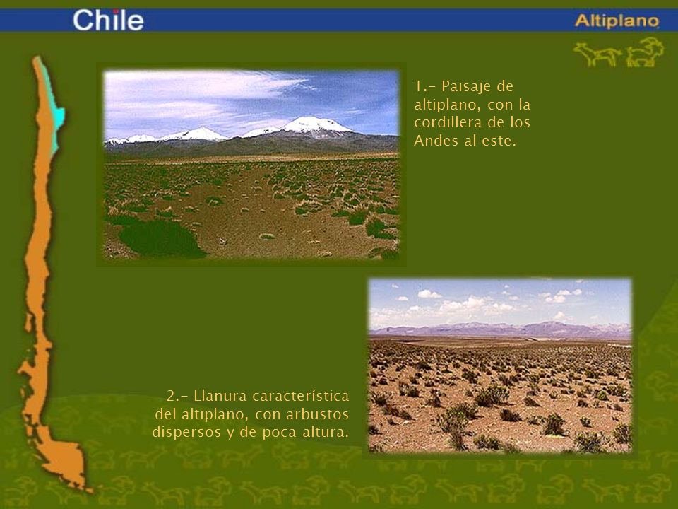 1.- Paisaje de altiplano, con la cordillera de los Andes al este. 2.- Llanura característica del altiplano, con arbustos dispersos y de poca altura.
