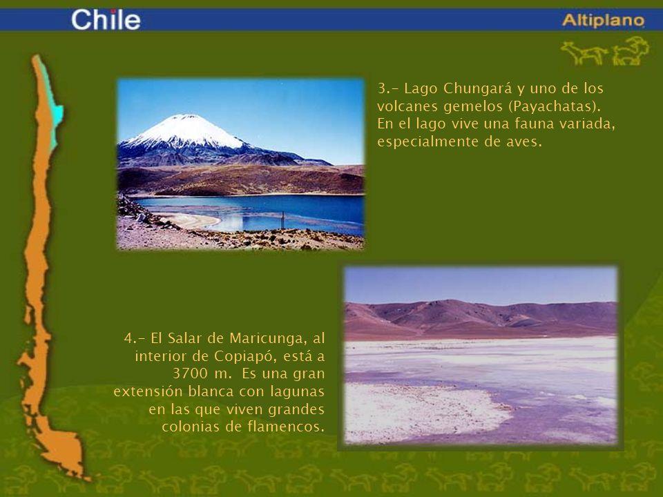 3.- Lago Chungará y uno de los volcanes gemelos (Payachatas). En el lago vive una fauna variada, especialmente de aves. 4.- El Salar de Maricunga, al