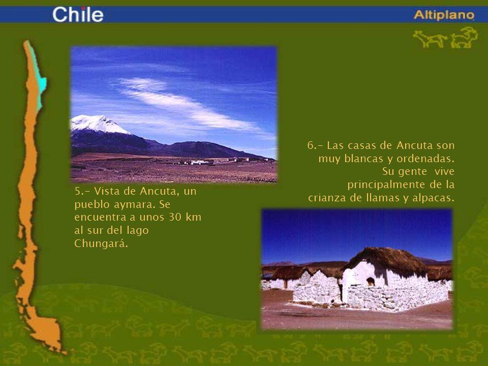5.- Vista de Ancuta, un pueblo aymara. Se encuentra a unos 30 km al sur del lago Chungará. 6.- Las casas de Ancuta son muy blancas y ordenadas. Su gen