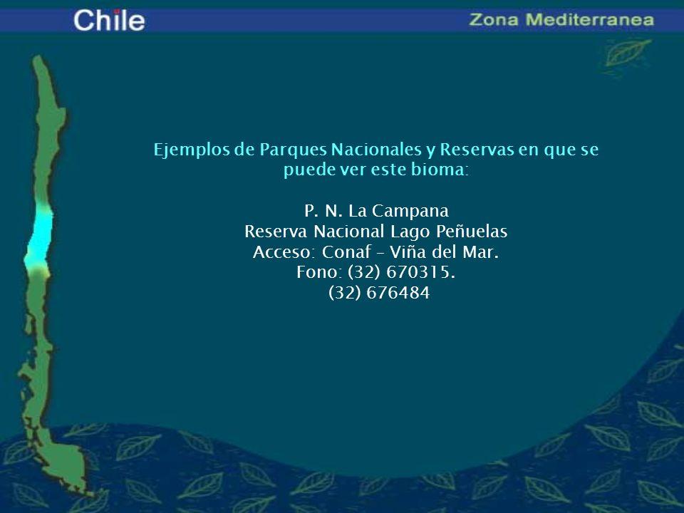 Ejemplos de Parques Nacionales y Reservas en que se puede ver este bioma: P. N. La Campana Reserva Nacional Lago Peñuelas Acceso: Conaf – Viña del Mar