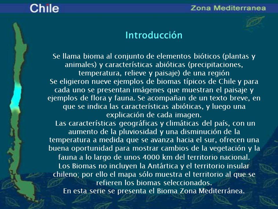 Biomas de Chile Los biomas seleccionados en esta gradiente climática latitudinal son: Desierto de Atacama(latitud 19° - 28°s) Desierto florido (un fenómeno ocasional dentro del bioma desierto) Semidesierto (latitud 28° - 30°S) Zona Mediterránea (latitud 30° - 38°S) Zona Lluviosa (latitud 38° - 42°S) Zona Austral (latitud 42° - 56°S) Estos otros cuatro biomas están relacionados principalmente con la altitud: El Altiplano(latitud 19° - 27°S) La Cordillera(latitud 19° - 51°S) El Litoral(latitud 18° - 56°S)