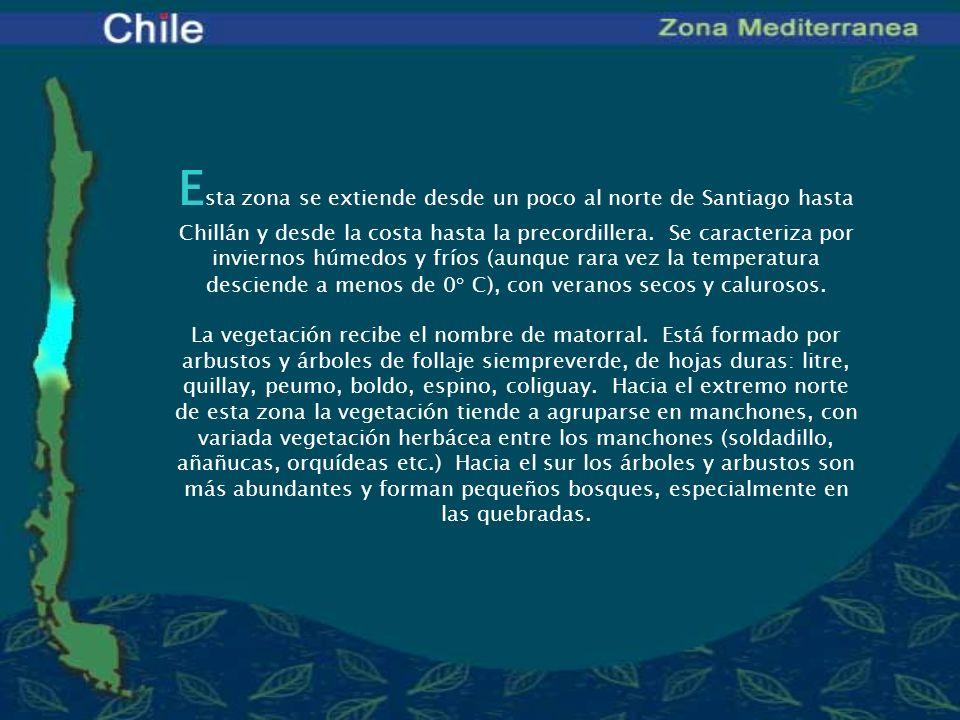 E sta zona se extiende desde un poco al norte de Santiago hasta Chillán y desde la costa hasta la precordillera. Se caracteriza por inviernos húmedos