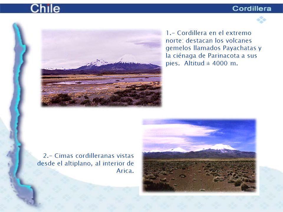 22.- Guanacos en las Torres del Paine.