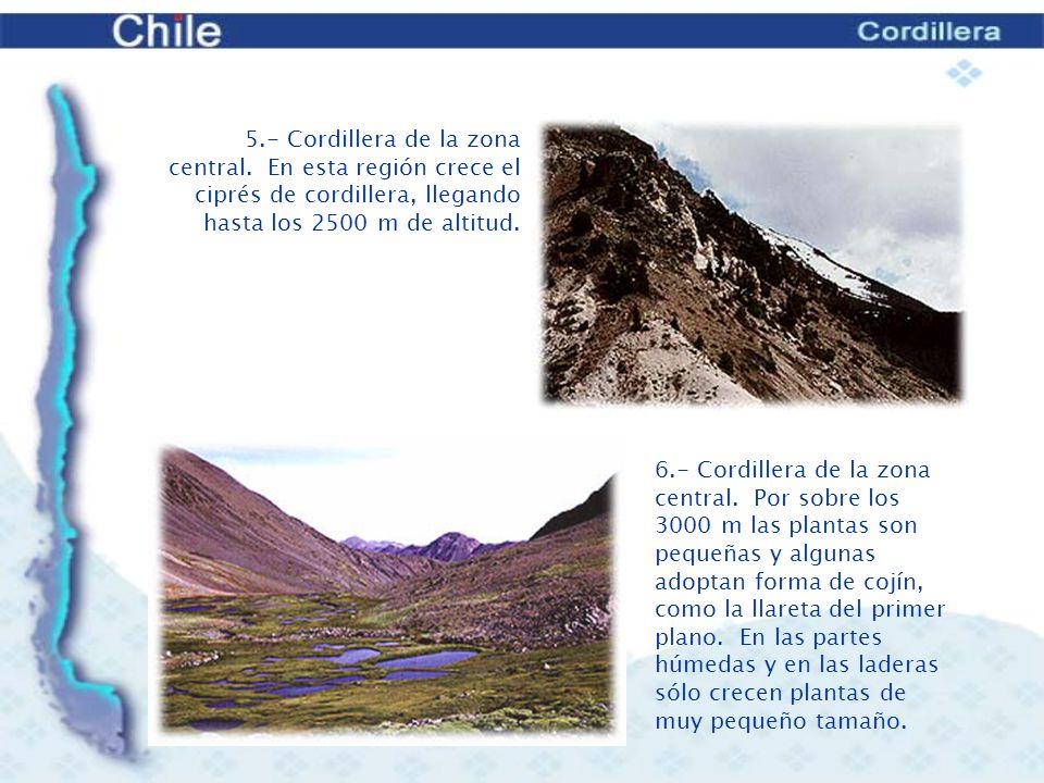 8.- Cima del Antillanca, con nieves eternas.7.- Volcán Llaima.